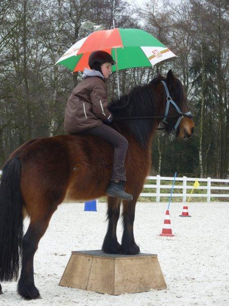 Vertrauenvolles Fell Pony