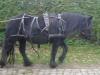 Einfahren Fell Pony Stute