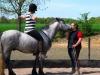 Fell Pony Schimmel