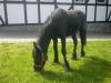 mai-2012-128-084dfcb50a0df97127fabbbc4df9873ea838d093