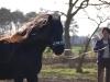 Fell Pony 2012