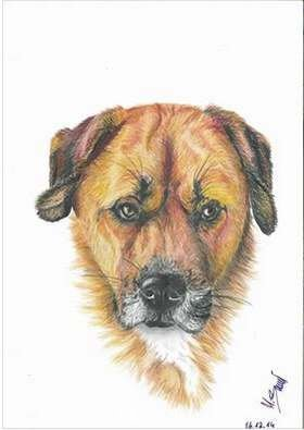 Kopf-Hund-Zeichung farbe.jpg