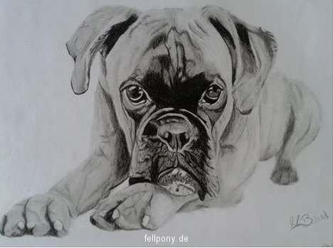 Zeichung Boxer.jpg