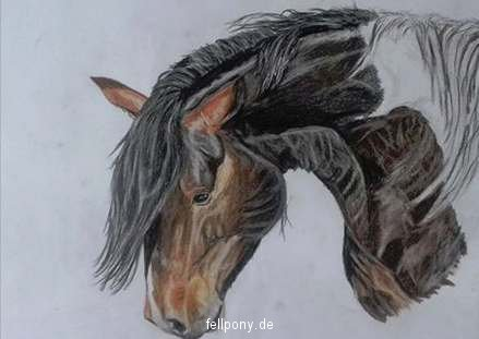 Zeichung_farbe_ Pferd_schecke.jpg