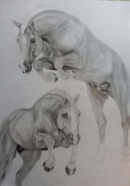 pferde-springend